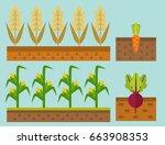 vector farm harvesting field... | Shutterstock .eps vector #663908353