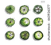 vector set of tree plan for... | Shutterstock .eps vector #663926377