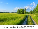 view of the field and the road | Shutterstock . vector #663987823