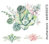 watercolor vintage succulents... | Shutterstock . vector #664050373