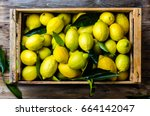 fresh lemon with leaves. lemon... | Shutterstock . vector #664142047