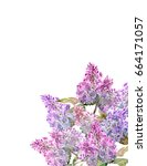 corner with flowering lilac... | Shutterstock . vector #664171057