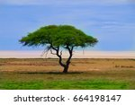 single acacia tree in etosha... | Shutterstock . vector #664198147