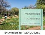 alonei abba nature reserve at...   Shutterstock . vector #664204267