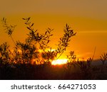 silhouette of olive tree at... | Shutterstock . vector #664271053