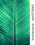 detail of large green foliage... | Shutterstock . vector #664375063