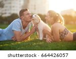 cute fluffy border collie puppy ... | Shutterstock . vector #664426057