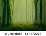 smooth mist in the woods | Shutterstock . vector #664470097