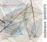 transparent backdrop texture of ...   Shutterstock . vector #664521373