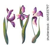 Vector Set Of 3 Iris Flowers...