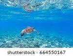 sea turtle in blue water.... | Shutterstock . vector #664550167
