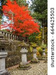 view of beautiful japan maple...   Shutterstock . vector #664625503