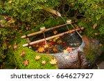 maple leafs fall on moss tone   Shutterstock . vector #664627927