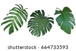 tropical leaves set isolated on ... | Shutterstock . vector #664733593