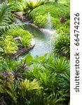 Tropical Garden  Pond And...