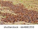 monarch butterflies around... | Shutterstock . vector #664881553