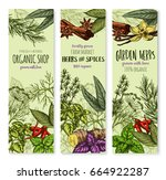 herbs and spices banners for... | Shutterstock .eps vector #664922287