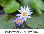 lotus flower | Shutterstock . vector #664967863