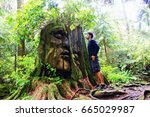 Stock photo natural ancient discovery in the forest man looks tree with face in stanley park secret 665029987