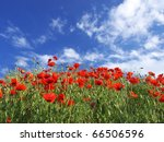 Field With Flower Of The Poppy...