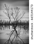 black and white dead tree in a... | Shutterstock . vector #665144173