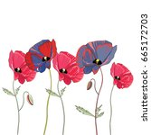 red and blue poppies. vector... | Shutterstock .eps vector #665172703
