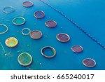 fish farming aquaculture  top... | Shutterstock . vector #665240017