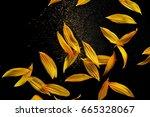 sunflower petals with pollen...   Shutterstock . vector #665328067