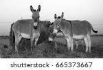 Three Donkeys In Black And...