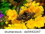 Small photo of Monarch butterfly, yellow and black with red accents; placed ever so delicately in the center of a bouquet of blooming yellow flowers, soft tones, in the background only serve to accent its beauty