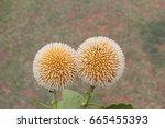 Beautiful Flowers.spherical...