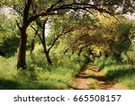 autumn forest. forest trail in... | Shutterstock . vector #665508157