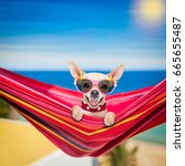 chihuahua dog relaxing on a... | Shutterstock . vector #665655487