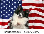 happy border collie laying on... | Shutterstock . vector #665779597