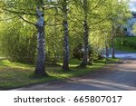 trees in a row | Shutterstock . vector #665807017