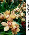 Small photo of yellow orchid