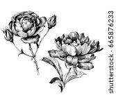 hand drawn botanical art... | Shutterstock .eps vector #665876233