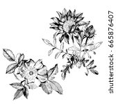 hand drawn botanical art... | Shutterstock .eps vector #665876407