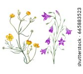 Watercolor Hand Painter Flower...