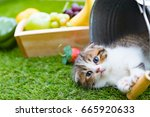 Stock photo group of small striped kittens 665920633