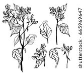 beautiful botanical vector.... | Shutterstock .eps vector #665969647
