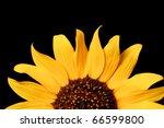 Close Up Of A Wild Sunflower  ...