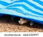 Cat Sleep Under Sheet Avoid Ho...