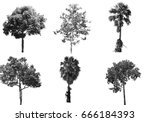 collection of isolated tree ob... | Shutterstock . vector #666184393
