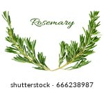 rosemary frame element forms a...   Shutterstock . vector #666238987