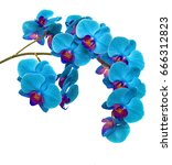 Orchids On Isolated Background...