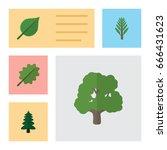 flat icon natural set of alder  ... | Shutterstock .eps vector #666431623