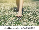 child's feet in daisy closeup... | Shutterstock . vector #666459007