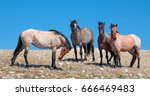 small herd of wild horses on... | Shutterstock . vector #666469483