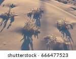 Frost Plants In The Snow